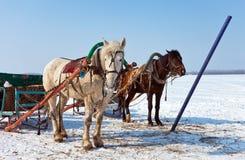 Deux chevaux au côté d'un fleuve figé Images libres de droits