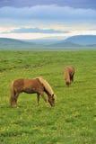 Deux chevaux au pré Photo stock