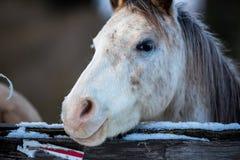 Deux chevaux d'amants Image stock