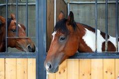Deux chevaux dans l'écurie Photos libres de droits