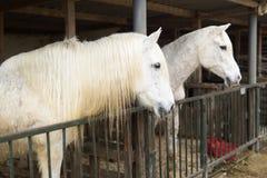 Deux chevaux dans un abri à Rojales Images stock