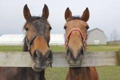Deux chevaux dans un corral Photographie stock libre de droits