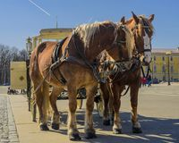 Deux chevaux dans une équipe avec un chariot sur la place de palais de St Petersburg images libres de droits