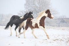 Deux chevaux de peinture jouant en hiver Images stock