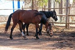 Deux chevaux debout Photographie stock