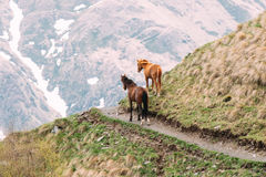 Deux chevaux frôlant sur la pente de montagne verte au printemps en montagne Image stock