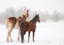 Deux chevaux givrés examinant la distance Photos libres de droits
