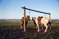 Deux chevaux ont attaché le concept ouvert de gisement de courrier ensemble Photos libres de droits