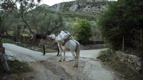 Deux chevaux se reposent après une vie pauvre de voyage de cargaison des personnes vivant dans les montagnes Transport des animau banque de vidéos