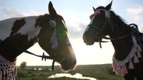 Deux chevaux sellés dans un support de frein sur un pré au coucher du soleil dans le mouvement lent clips vidéos