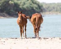 Deux chevaux sur la nature Images stock