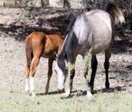 Deux chevaux sur la nature Images libres de droits