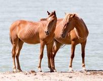 Deux chevaux sur la nature Photographie stock libre de droits