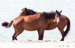 Deux chevaux sur la nature Photo stock