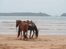 Deux chevaux sur la plage Photos libres de droits