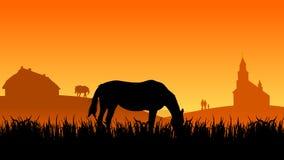 Deux chevaux sur le pâturage au coucher du soleil Photographie stock