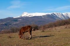 Deux chevaux sur un pâturage contre des montagnes Photographie stock