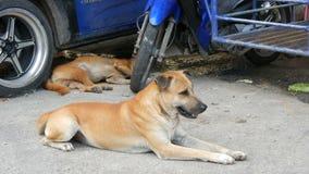 Deux chiens égarés se trouvent sur la rue sous la voiture bleue Crabots sans foyer banque de vidéos