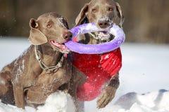 Deux chiens Photo libre de droits