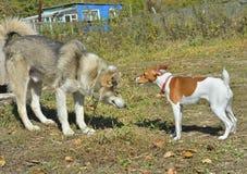Deux chiens 4 Image stock