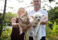 Deux chiens d'animaux familiers dans le premier plan Photos stock
