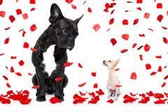Deux chiens dans l'amour le jour de valentines Images stock