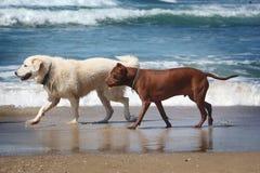 Chiens sur la plage images stock