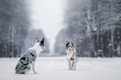 Deux chiens ensemble, amitié sur la nature en hiver Photographie stock