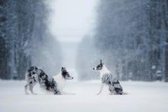 Deux chiens ensemble, amitié sur la nature en hiver Photo stock