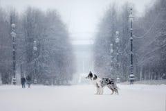 Deux chiens ensemble, amitié sur la nature en hiver Photographie stock libre de droits