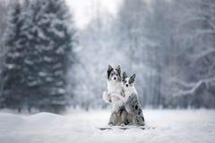 Deux chiens ensemble, amitié sur la nature en hiver Photo libre de droits