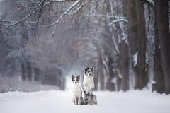 Deux chiens ensemble, amitié sur la nature en hiver Image libre de droits