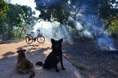 Deux chiens et bicyclettes avec la lumière de matin image stock