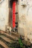 Deux chiens et couplets à Huizhou Image stock