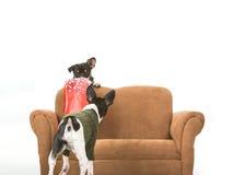 Deux chiens et un sac de cadeau image stock