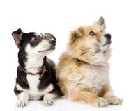 Deux chiens se trouvant ensemble Images stock