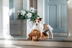 Deux chiens sur le porche image libre de droits