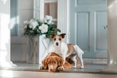 Deux chiens sur le porche photos libres de droits