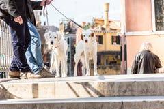 Deux chiens sur un pont image libre de droits