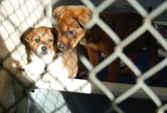 Deux chiots dans une cage Image stock