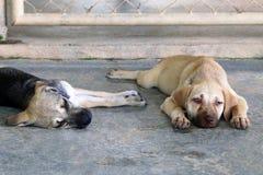 Deux chiots dorment sur un trottoir sur une rue Images libres de droits