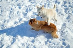 Deux chiots jouant en hiver Photos libres de droits