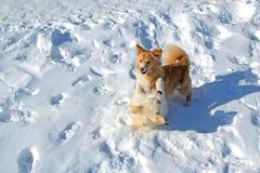 Deux chiots jouant en hiver Photographie stock libre de droits