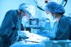 Deux chirurgiens vétérinaires dans la salle d'opération Image stock