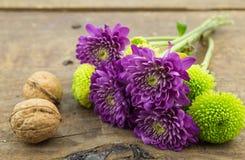 Deux chrysanthèmes de noix, verts et pourpres sur le Ba en bois Photo stock
