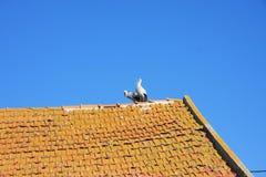 Deux cigognes sur le toit carrelé sur le fond du ciel bleu images stock