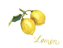 Deux citrons d'aquarelle Photographie stock