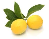 Deux citrons sur le fond blanc Photo libre de droits