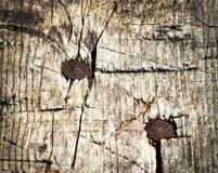 Deux clous rouillés en bois photographie stock