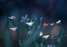 Deux coccinelles volent dans une clairière de forêt avec le beau flowe blanc Images stock